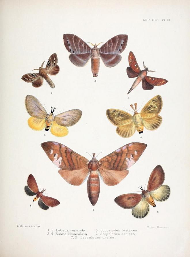 Biodiversity_01