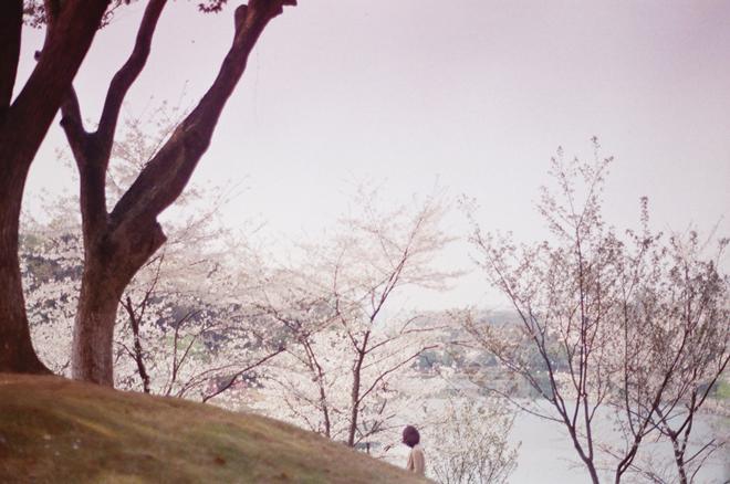 02_li_hui_hidden_sakura