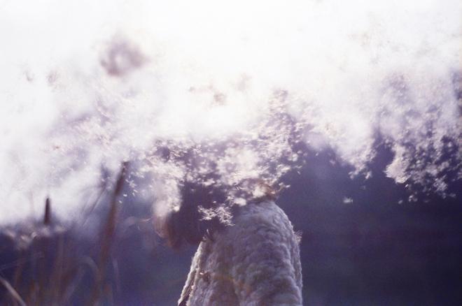 10_li_hui_wind_dandelion